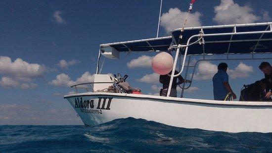 Aldora Divers : Aldora twin engine boats