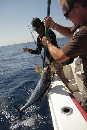 Bahamas Charter Fishing - N A Hurry Charters: Gaffing a wahoo
