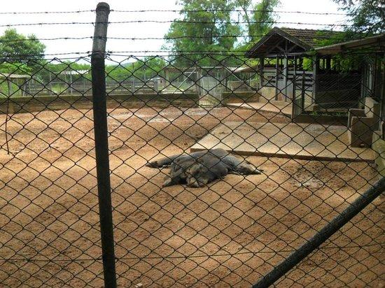 Sapucaia Do Sul: Família de mamíferos