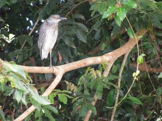 Barebones Tours, Day and Night Tours: one of dozens of birds along the river