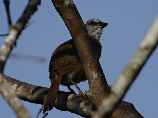 Rancho La Botija: Variedad de AVes