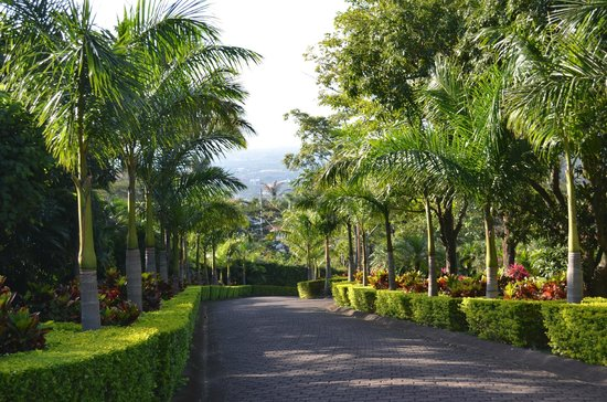 Ringle Resort Hotel & Spa: the driveway to the hotel