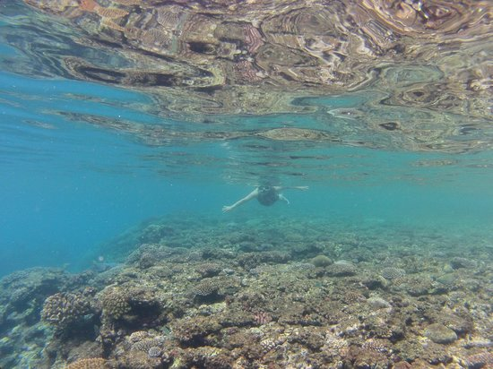Island Magic Resort: Snorkelling on the reef flat