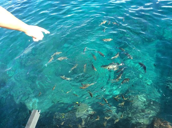 Island Magic Resort: Fish feeding from the jetty
