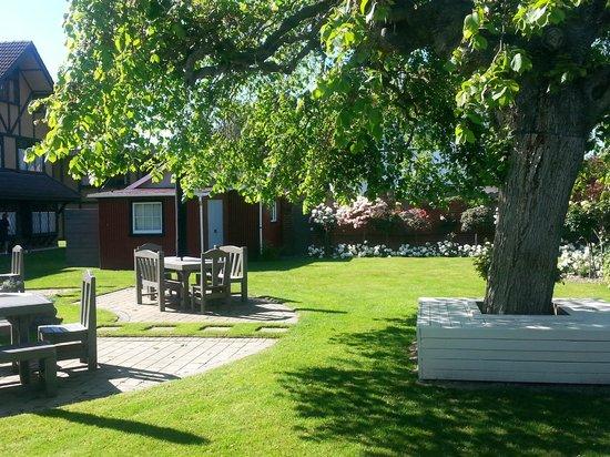 Hotel Coachman: Garden Tree