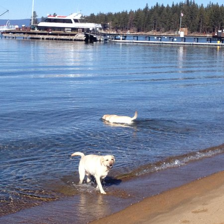 Zephyr Cove Resort: dogs lovin the lake (15 degrees out!)