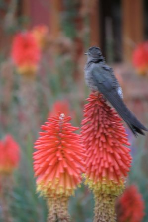 Pakaritampu Hotel: the garden filled with birds