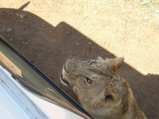 Chalkoko Safaris : Safari van provided shade for this guy