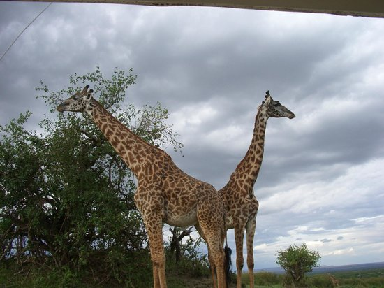 Chalkoko Safaris : We could hear them crunching when they chewed!