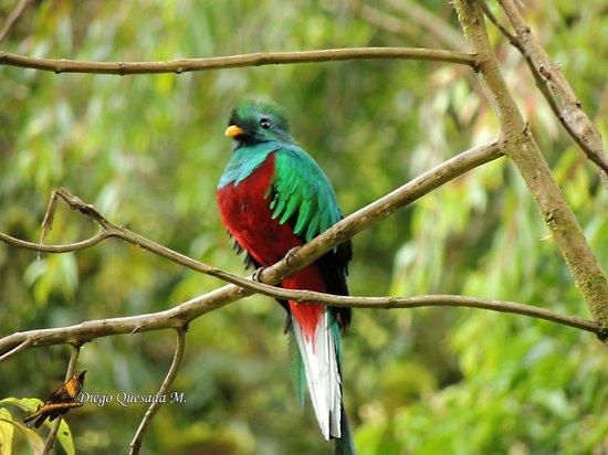 Diego Birding & Nature Day Tours