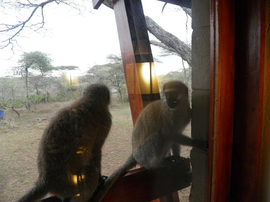 Seronera Wildlife Lodge: Curious onlookers