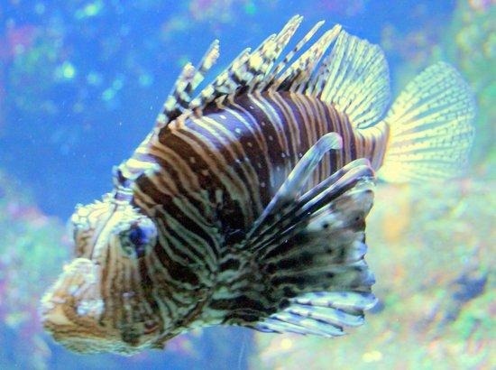 Aquarium de la Réunion : !