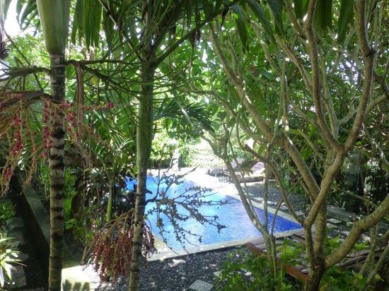 โรงแรมทรอปิคัล บาหลี: Swimming Pool