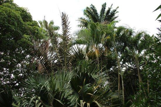 Un arbre content picture of jardin d 39 eden saint gilles for Le jardin d eden