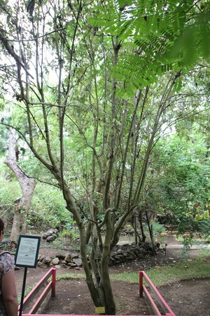 Jardin d'Eden : !