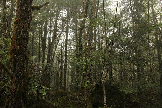 Yanzigou Scenic Resort: Ancient Forest