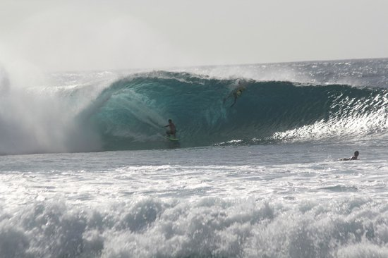 Active Oahu Tours: experience first hand or admire safely from shore the majesty and power of the north shore waves