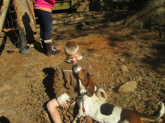 Adventure Trail Rides: bassett hound played with us