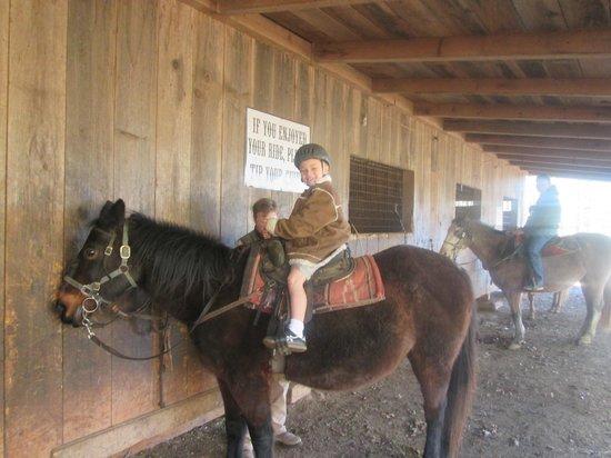 Adventure Trail Rides: sons horse