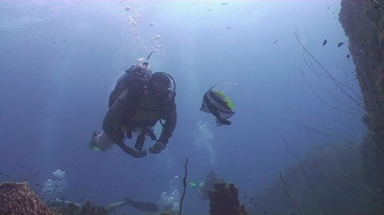 Coral Grand Divers : Diving in Koh Tao