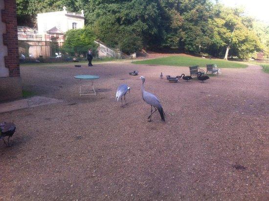 Reserve zoologique de Sauvage: A l'entrée, de multiples oiseaux de toutes sortes, dans l'étang mais aussi sur le chemin.