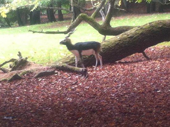 Reserve zoologique de Sauvage: Vers le font du parc, on peut approcher d'assez près des hordes de biches et d'antilopes.