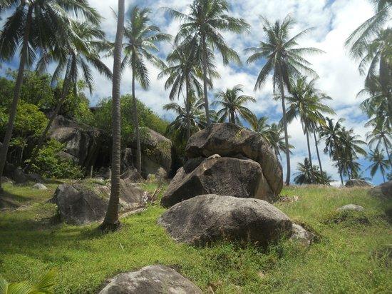 Dusit Buncha Resort : isola