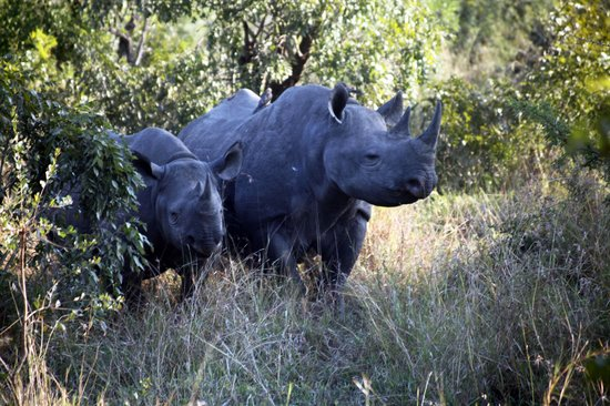 Thornhill Safari Lodge: Mother and Baby