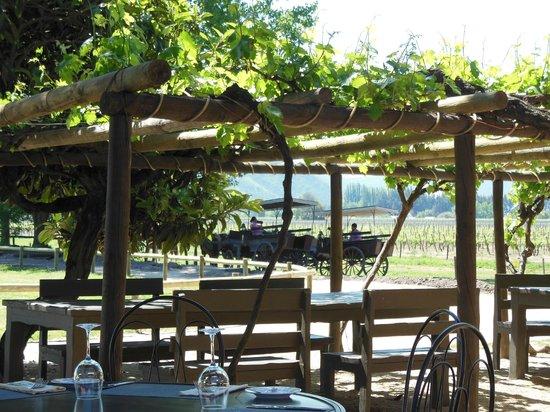 Liz Caskey Culinary & Wine Experiences: Viu Manent vineyard restaurant