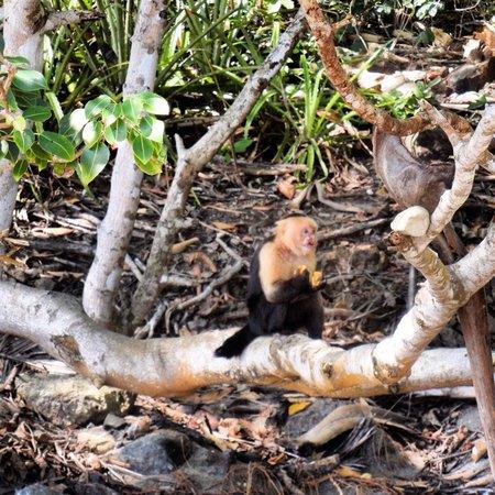 La Escuela Del Sol: Monkey! Lots of these little guys around.
