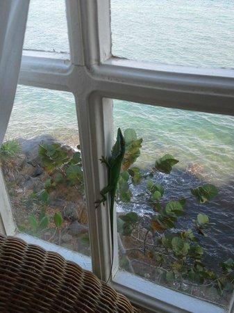 Paya Bay Resort: Cliffside Room #4 View