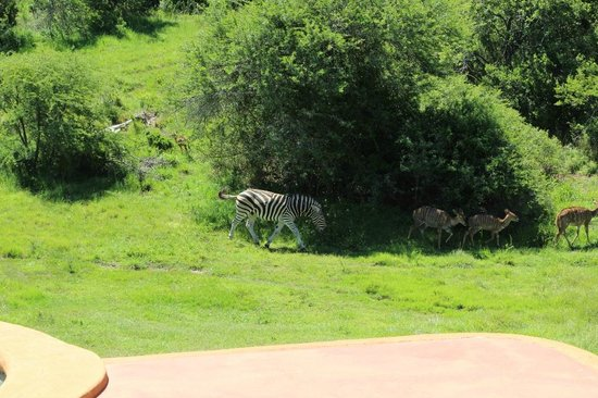 Amakhala Safari Lodge : As seen from our lodge