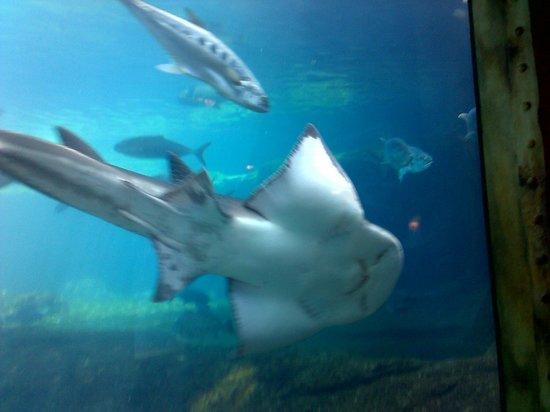 Lion Fish Picture Of Ushaka Sea World Aquarium Durban