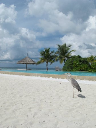 Cocoa Island by COMO: View from the Bar - the famous 1-legged bird.