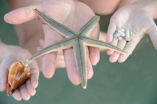 Sanibel Siesta on the Beach: What you may find at our beach