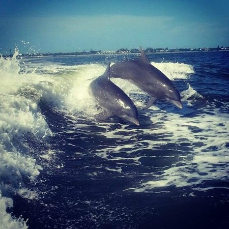 Sanibel Siesta on the Beach: Dolphins showing of for our guests
