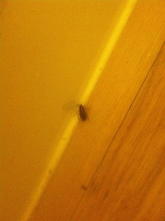 Red Roof Inn Columbia East - Ft Jackson : Roach crawling in bathroom