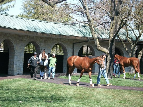 Keeneland: Horses getting ready for their race