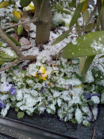 Oak Bay Guest House : snowing in Dec in Victoria