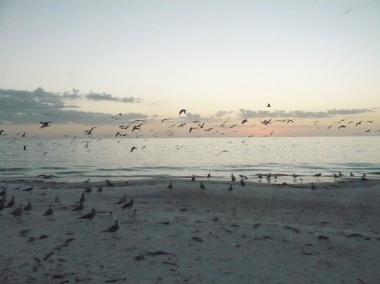 Outrigger Beach Resort: Birds, birds