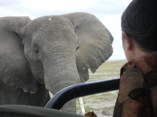 Gamewatchers Adventure Camp, Selenkay : Big Elephant, very close