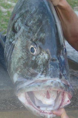 Beach Villa Seychelles: Fischfang - nach dem Fishing
