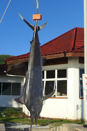 Beach Villa Seychelles: Black Marlin-Fishfang mit Martin