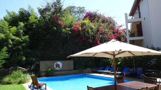 The African Tulip: Pool area