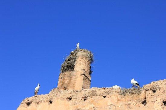 El Badi Palace: Cigueñas