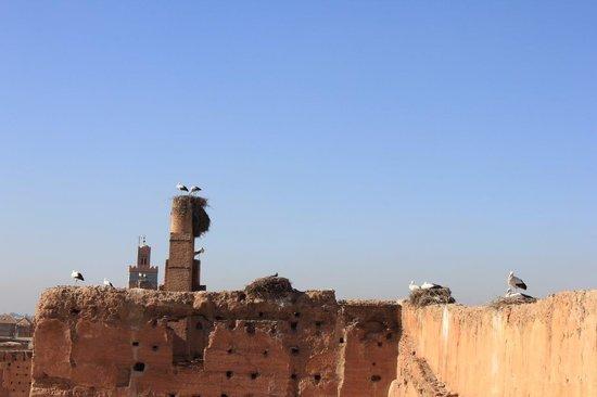 El Badi Palast: panoramica