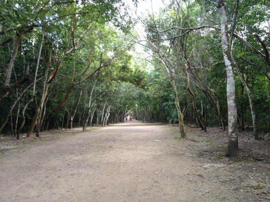 Ruinas de Coba: The road