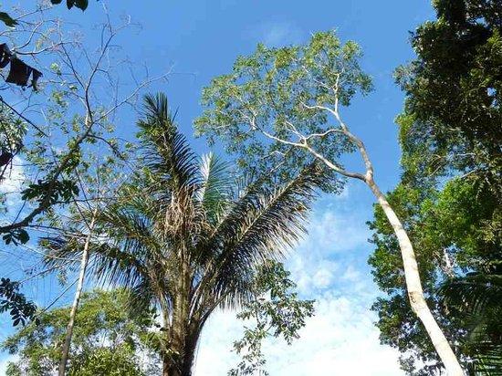Omshanty : Jungle Overhead
