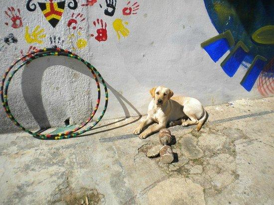 Casa Caracol Hostel : Lola (La Jefa)