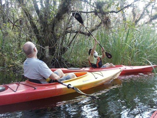 Everglades Rentals & Eco Adventures : Spanish Moss